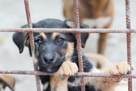 Новая система обращения с безнадзорными животными